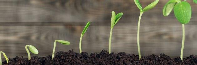 Jayne Poli on Service Teams That Drive Spiritual Growth