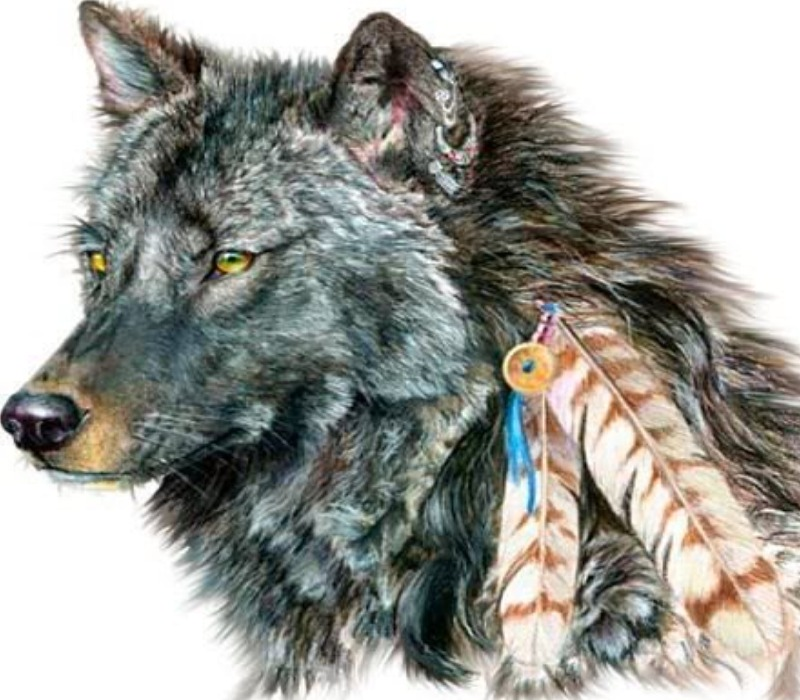 indian-wolf