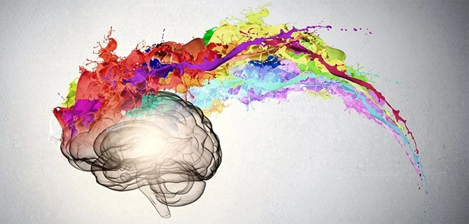 Highly creative people have more nerve connections between the right and left sides of their brains.