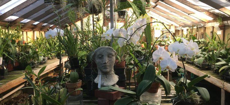 Go plant shopping at the San Mateo Arboretum Society