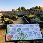 Information sign of the Pollinator Garden.