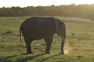 Afrique du Sud (473) (Large)