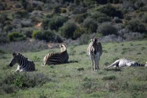 Afrique du Sud (522) (Large)