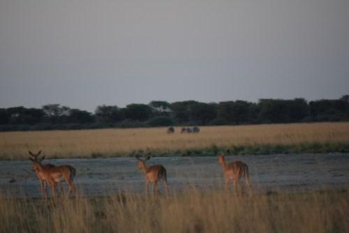 botswana-large-2005