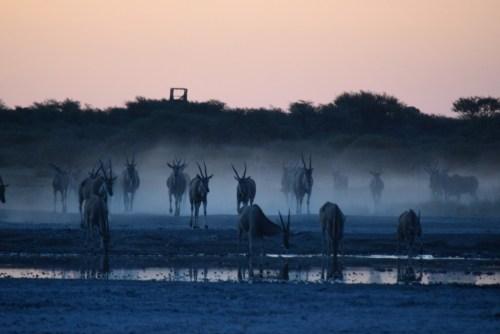 botswana-large-2052