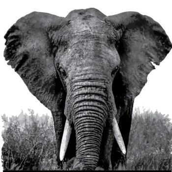 Elephant Sense Studios: Online Strategies That Make A Difference