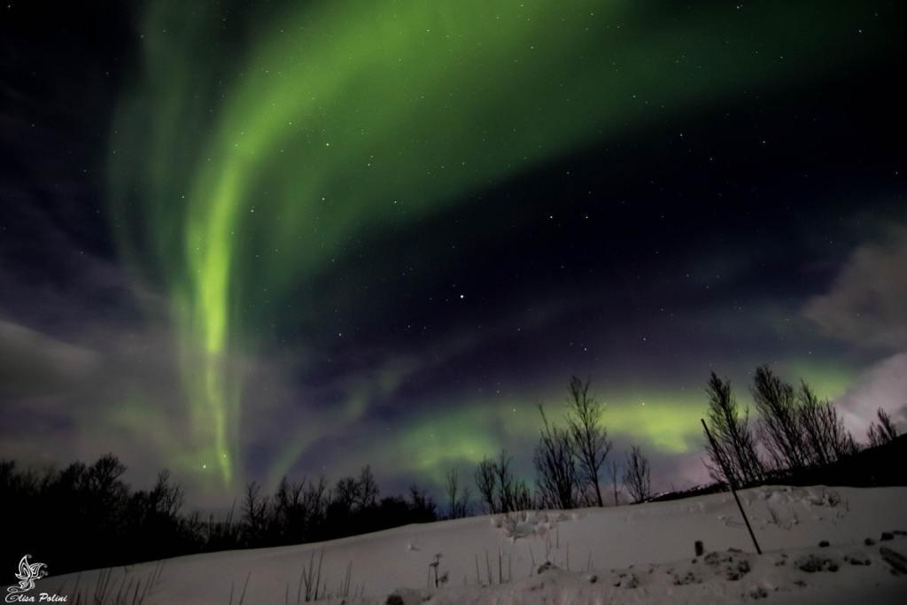 Aurora Boreale in Lapponia - Isola di Senja