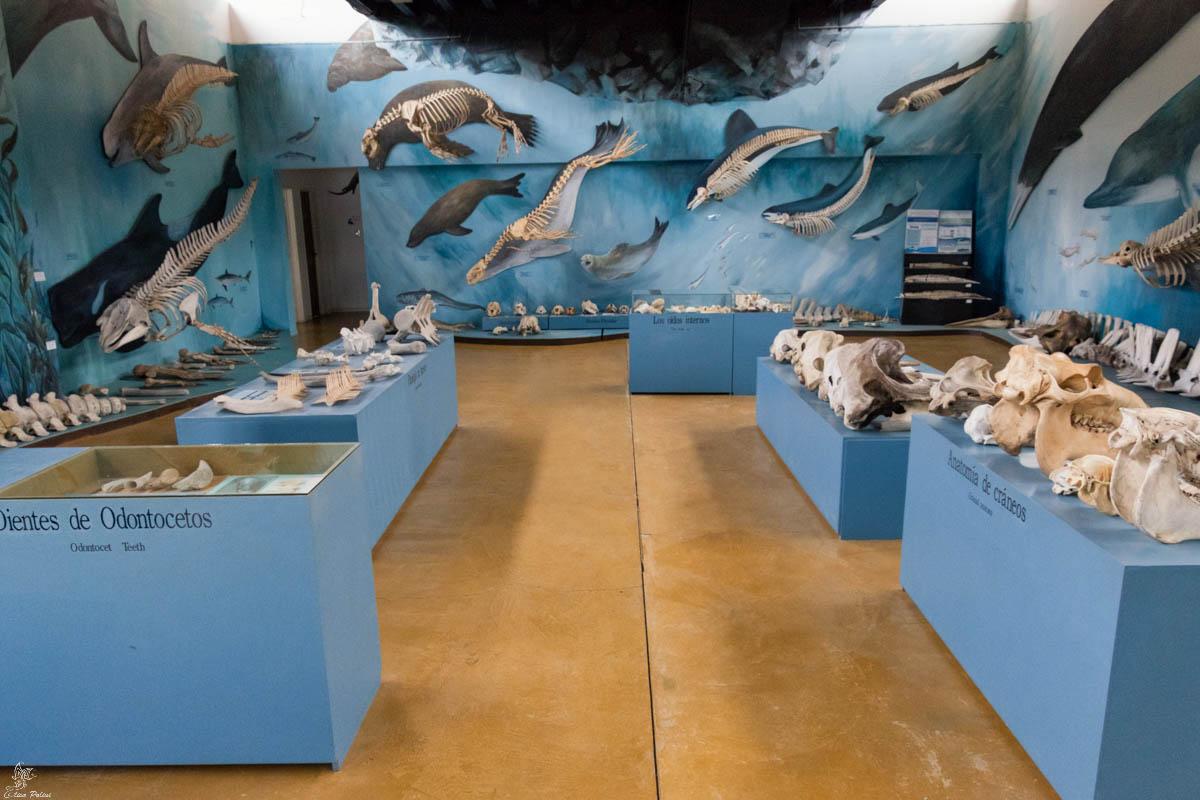 Canale di Beagle: Museo Acatushún de Aves y Mamíferos Marinos Australes