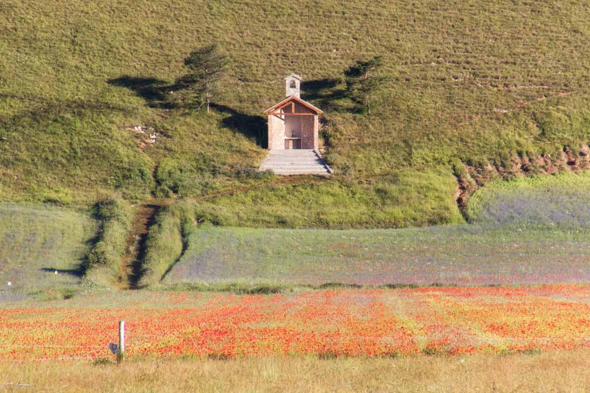 Fioritura di Castelluccio di Norcia: Bosco Italia