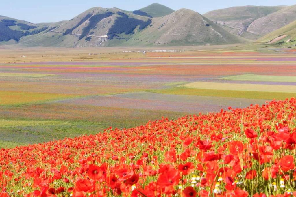 Fioritura di Castelluccio di Norcia: il Pian Grande tutto dipinto