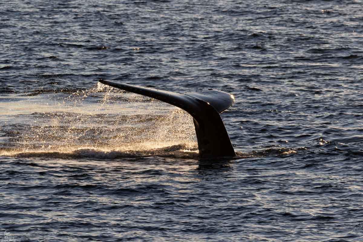 Antartide: Humpback Whale