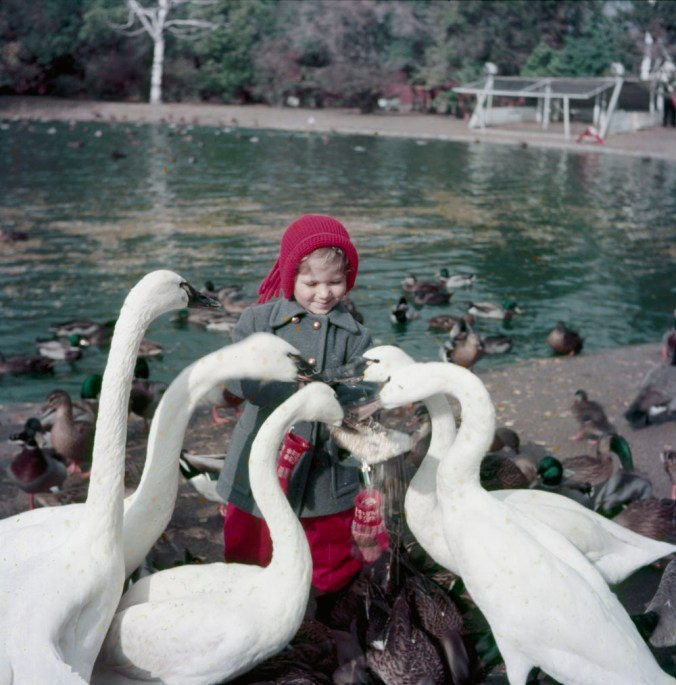 Little girl outdoors feeding five swans, Kingsville (November 1954) / Chris Lund. Canada. National Film Board of Canada. Photothèque. Library and Archives Canada, e010949255 / CC by 2.0