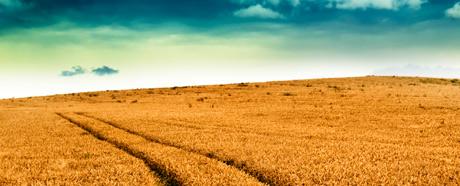 https://i0.wp.com/www.uoguelph.ca/fare/FARE-talk/canadian-wheat.jpg
