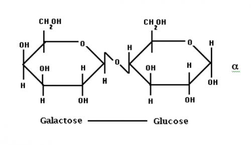 Lactose | Food Science