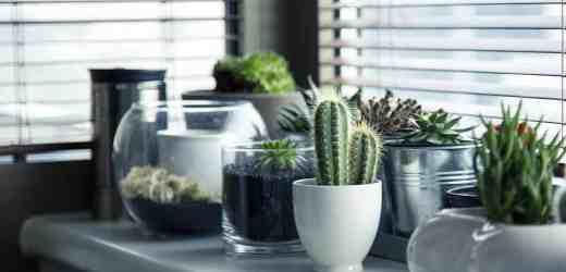 春天到啦 適宜在室內種養的5種小植物