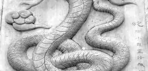 十二生肖 | 巳(蛇)🐍