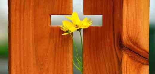 聖經金句:安慰 | 叫我們能用神所賜的安慰, 去安慰那遭各樣患難的人.