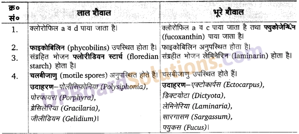 साइकस का चित्र UP Board Solutions For Class 11 Biology Chapter 3
