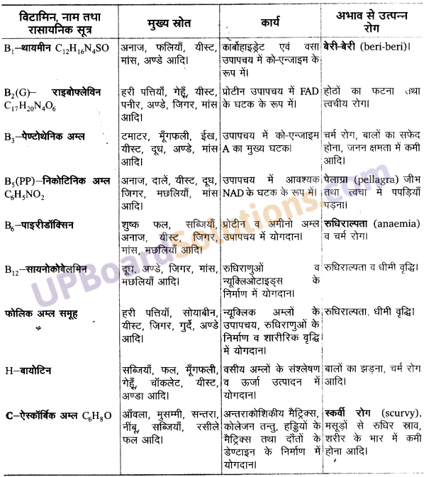 UP Board Solutions for Class 11 Biology Chapter 16 Digestion and Absorption image 13