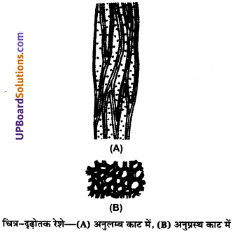 UP Board Solutions for Class 11 Biology Chapter 6 Anatomy of Flowering Plants image 17