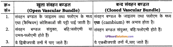 UP Board Solutions for Class 11 Biology Chapter 6 Anatomy of Flowering Plants image 7