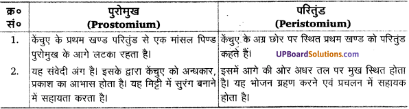 UP Board Solutions for Class 11 Biology Chapter 7 Structural Organisation in Animalsimage 3
