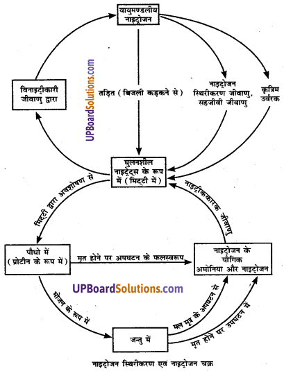UP Board Solutions for Class 8 Science Chapter 10 फसल उत्पादन img-2