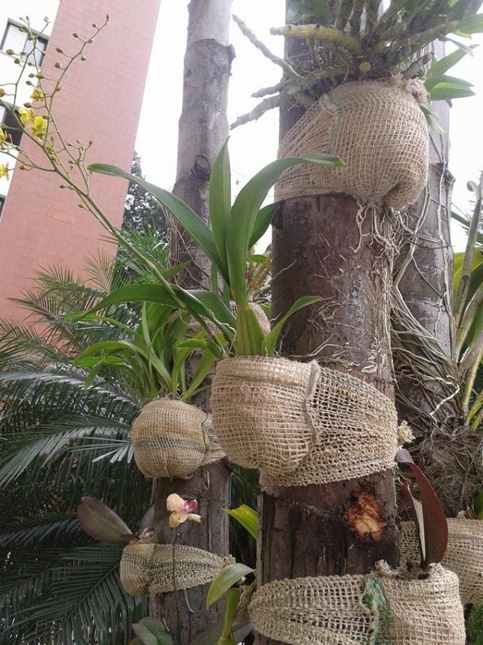 Burlap Tree Planters Upcycle Art