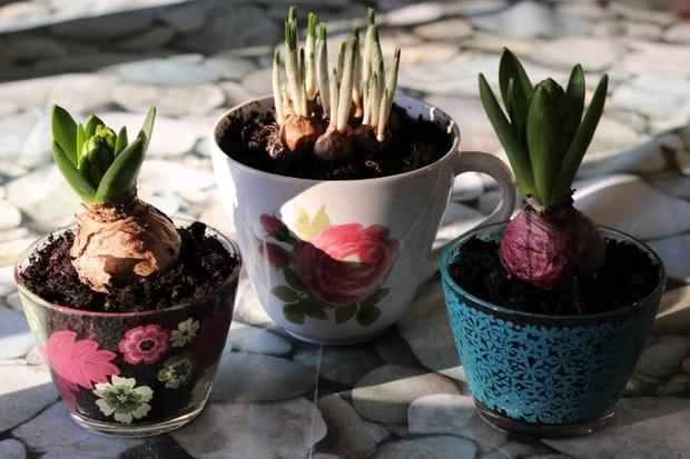 Tazas de té de reutilización mini jardín plantador ideas de bricolaje plantas de jardín decoración