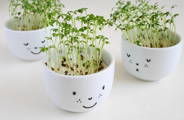 reutilizar viejas tazas de té de porcelana blanca Mini plantador las ideas interior de la hierba del jardín