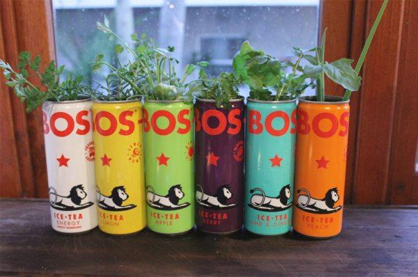 bos ice tea herb garden
