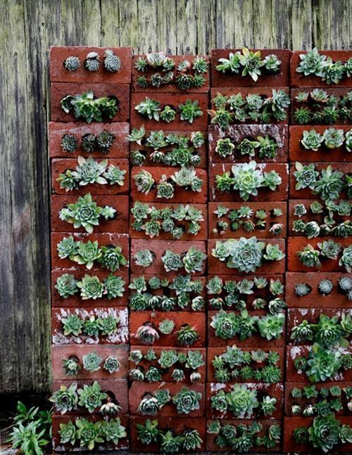 succulent brick wall