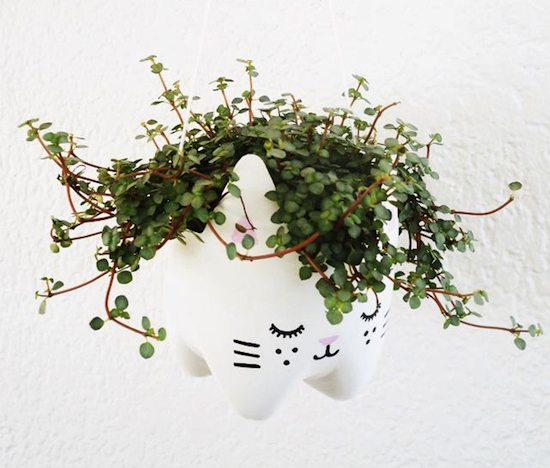 cat planter pot