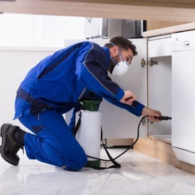 Pest control service UK