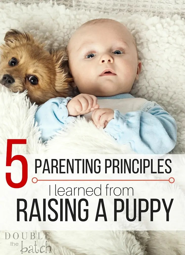 Just when I thought I knew a thing or two about parenting-I read this! Parenting principles from a new puppy? Who knew!