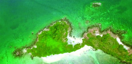 6 Spectacular Species of Pigeon Island You Must Watch.!!!