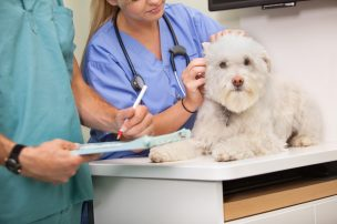 Veterinary Doctors Service
