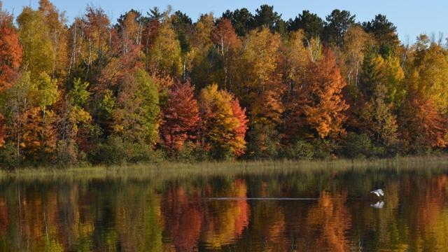 Fall leaves 9_2818965048909184-159532