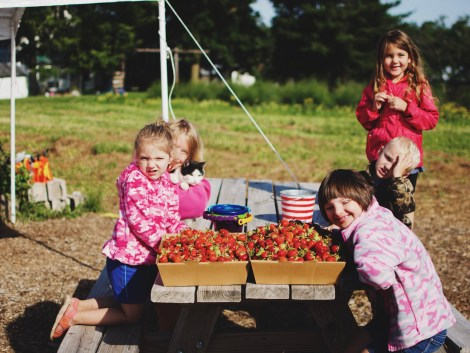 Nelson's Berries | Up North Parent