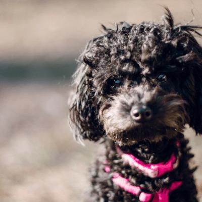 Avoiding Hot Dogs | Summer Pet Care Tips from Lakeland Veterinary Hospital