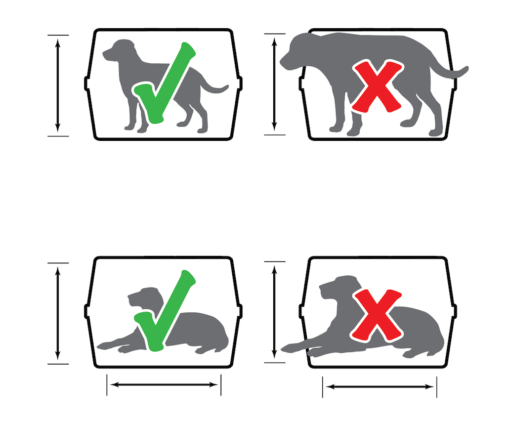 United Airlines Pet Policy (International, Cargo, Carry-on