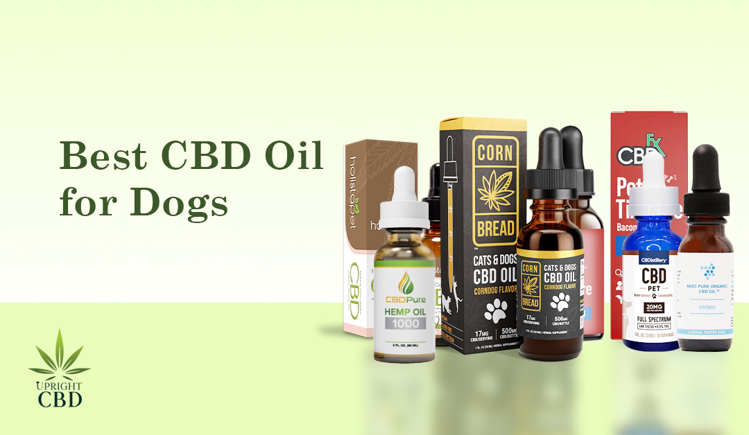 Best CBD Oil for Dogs: A Step by Step Guide