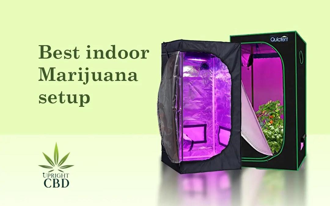 Best indoor marijuana setup: The ultimate guide!