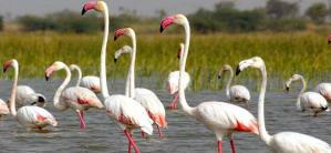 List of Bird sanctuaries of India