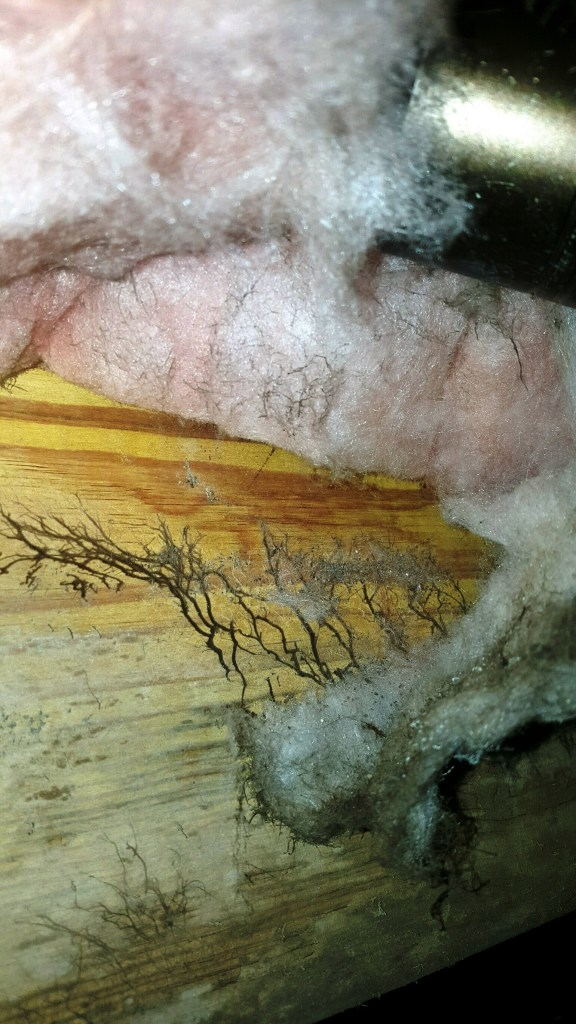 mold-inspection-upstate-sc