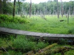 Dyken Pond
