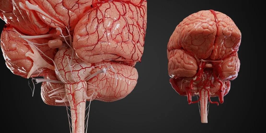 Academy Topics: Anatomy