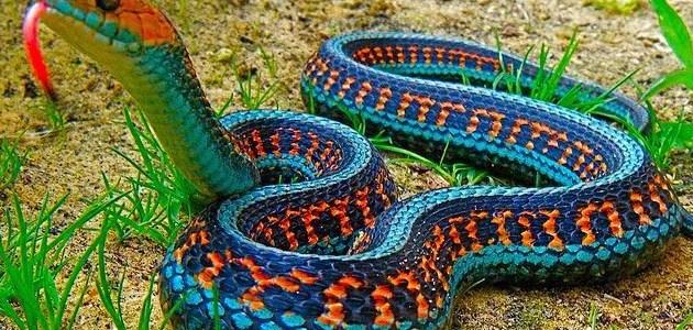 ¿Cuál es el significado de soñar con serpientes?
