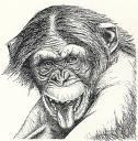chimp-aggress