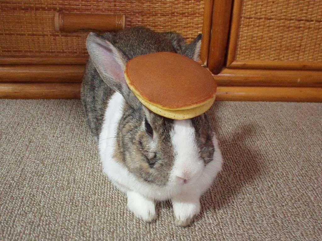 Derpy Pancake Bunny Argument Is Invalid